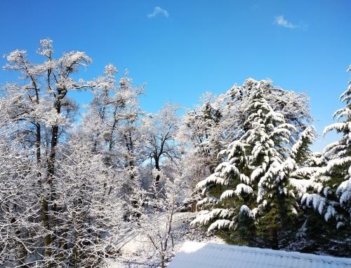Prvi zimski dan