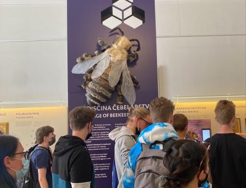 Sodelovanje s Čebelarskim muzejem